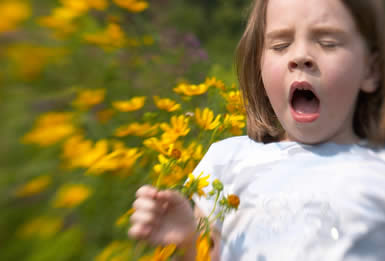 Hay Fever and Atopic Asthma
